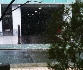 名古屋は雪です。